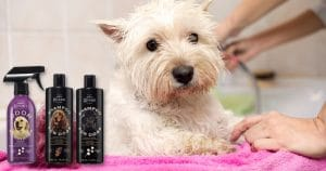 How To Keep Your Dog Clean And Smelling Good